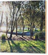 Tree And Shadow Wood Print