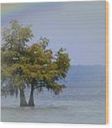 Tree And The Rainbow Wood Print