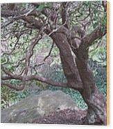 Tree At Boat House Wood Print