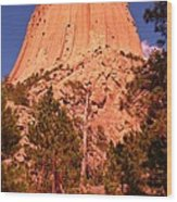 Tree At Devils Tower Wood Print