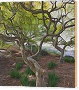 Tree At Norfolk Botanical Garden Wood Print