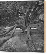 tree at Normanby Park Wood Print