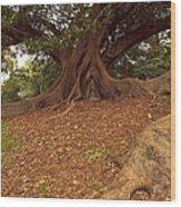 Tree At Royal Botanic Garden Wood Print