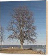 Tree At Sandy Point Wood Print