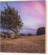 Tree At Sunset Wood Print by John Farnan