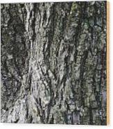 Tree Bark 2 Wood Print