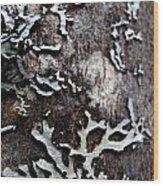 Tree Bark Fungi Wood Print by Steven Valkenberg