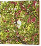 Tree Blossom 1 Wood Print