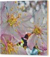 Tree Blossom Wood Print
