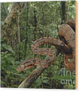 Tree Boa Wood Print by Francesco Tomasinelli