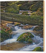 Tree Bridge In The Smokies Wood Print