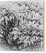 Tree Bush Vignette Wood Print