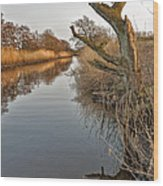 Tree By The River Wood Print