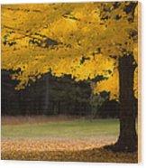 Tree Canopy Glowing In The Morning Sun Wood Print