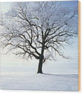 Tree Covered In Hoar Frost Wood Print
