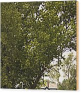 Tree Covered Wood Print