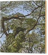 Tree Dancer Wood Print
