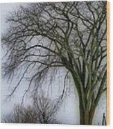 Tree Elder Wood Print