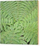 Tree Fern (ponga Wood Print
