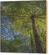 Tree Ferns From Below Wood Print
