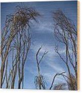 Tree Fingers Wood Print