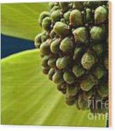 Tree Flower I Wood Print