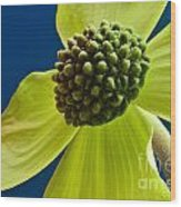 Tree Flower II Wood Print