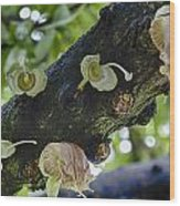 Tree Flowers Wood Print