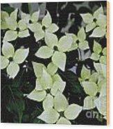 Tree Flowers Wood Print