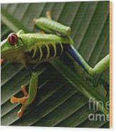 Tree Frog 16 Wood Print