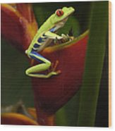 Tree Frog 3 Wood Print by Bob Christopher
