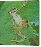 Tree Frog And Mahonia. Wood Print
