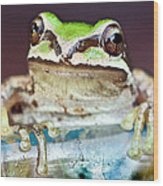 Tree Frog Wood Print by Jean Noren