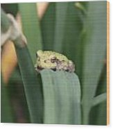 Tree Frog Up Close Wood Print