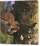 Tree Fungus  Wood Print