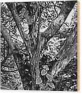 Tree Giant Wood Print