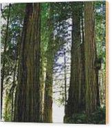 Tree Giants Wood Print