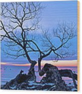 Tree Hanging Over Lake - Photographers Collection Wood Print