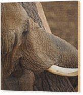 Tree Hugging Elephant Wood Print