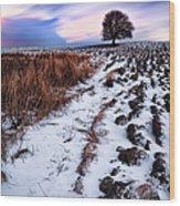 Tree In A Field  Wood Print by John Farnan
