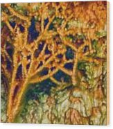 Tree In A Park Hot Springs Wood Print