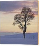 Tree In A Winter Landscape In The Evening Wood Print