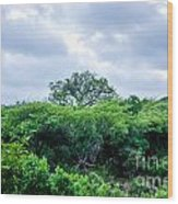 Marula Tree In African Sky Wood Print