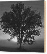 Tree In Black And White Wood Print