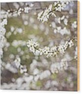 Tree In Blossom Wood Print
