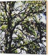 Tree In Blue Ridge Mountains Wood Print