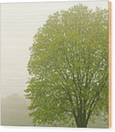Tree In Fog Wood Print