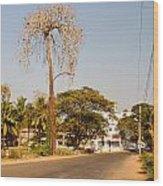 Tree In Goa Wood Print