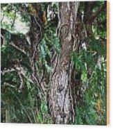 Tree In Kauai Wood Print