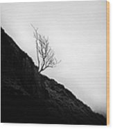 Tree In Mist Wood Print by John Farnan
